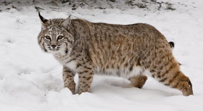 Phát hiện sốc về mèo hoang trong 'trang trại thi thể' ở Mỹ