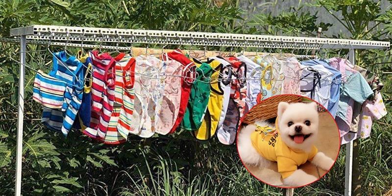 """Phơi quần áo thú cưng, nữ sinh bị cả xóm đồn là """"chửa hoang"""""""