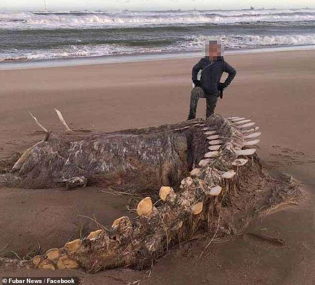 Xương quái vật hồ Loch Ness trôi dạt vào bờ biển Scotland?