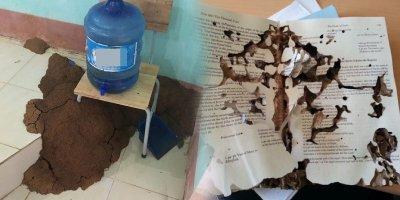 Học sinh đua nhau khoe hình sách vở bị côn trùng làm tổ sau kỳ nghỉ