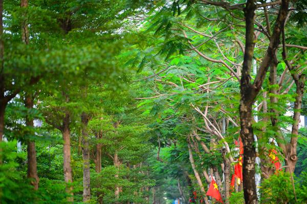 Đường đi bộ tràn cây xanh mới xuất hiện ở Hà Nội