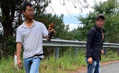 Người bắn chết 2 con chim đầu rìu ở Đà Lạt bị phạt 10 triệu