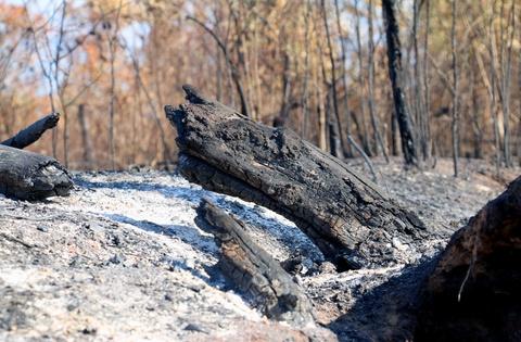 Điều tra vụ cháy gần 100 ha rừng