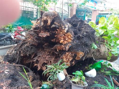 Hiệu trưởng nhận trách nhiệm vụ cây phượng đổ khiến học sinh tử vong