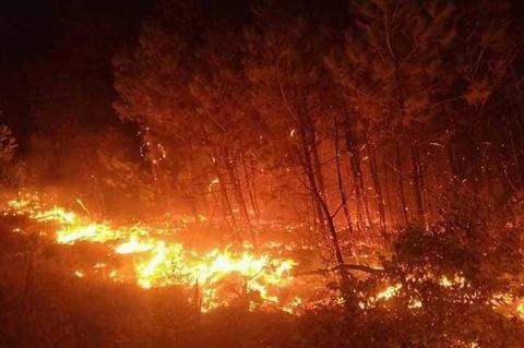Cháy rừng diện rộng ở Nghệ An