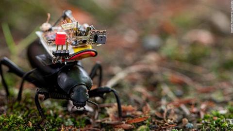 Camera siêu nhỏ gắn lên lưng côn trùng
