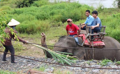 Nữ du khách gặp nạn khi cưỡi voi tham quan ở Buôn Đôn