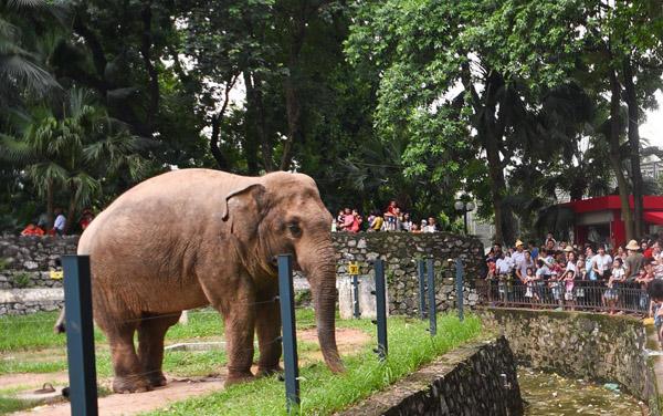Hà Nội lên kế hoạch cải tạo vườn thú Công viên Thủ Lệ