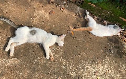 24 con chó, mèo bị đầu độc