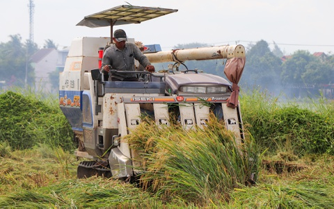 Người Hội An gặt lúa 'chạy' bão số 5