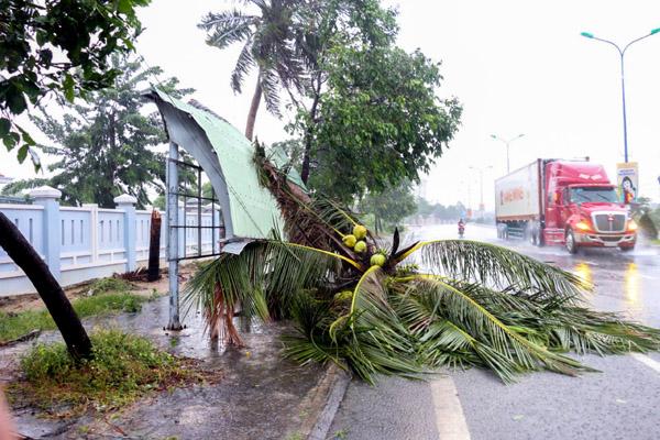 Cây gãy đổ la liệt khi bão số 12 quét qua Nha Trang