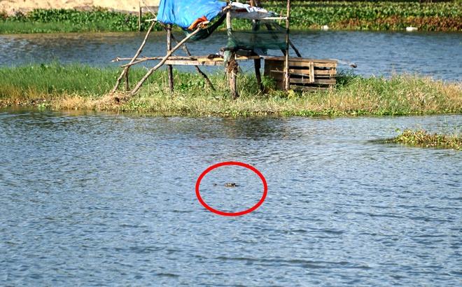 Chưa bắt được cá sấu nổi giữa hồ nước ở Vũng Tàu