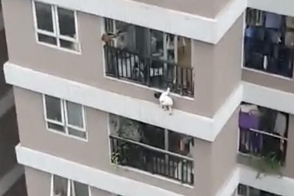 Bé gái thoát chết khi rơi từ tầng 12A