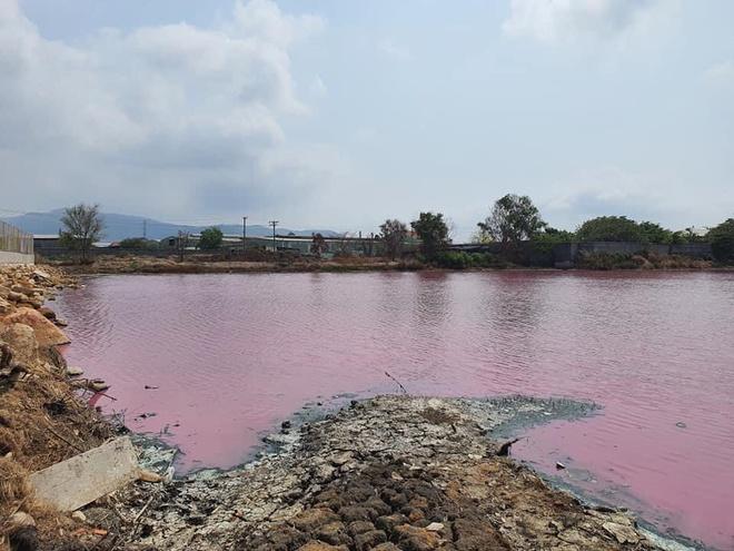 Nước hồ chuyển màu hồng, bốc mùi hôi thối