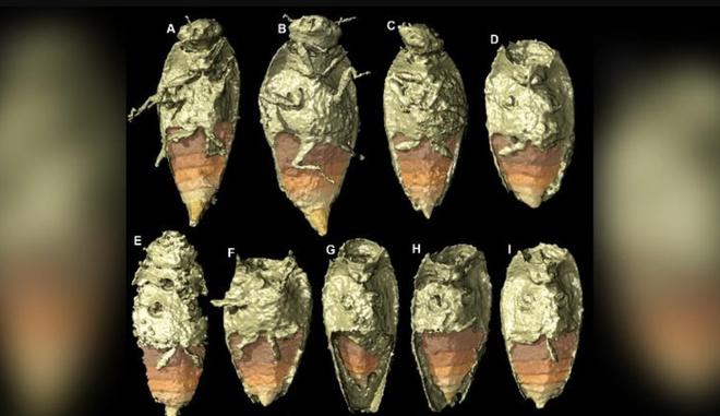 Tìm thấy báu vật trong hóa thạch phân khủng long