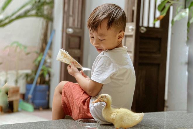 Tự ấp trứng, nuôi vịt khi ở nhà giãn cách