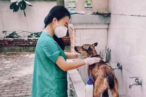 Cô gái ở TP.HCM chăm sóc chó, mèo cho F0 tại khu cách ly